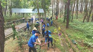 Chi đoàn Khu di tích Kim Liên phối hợp trồng 300 cây hoa Sim tại Khu mộ Bà Hoàng Thị Loan
