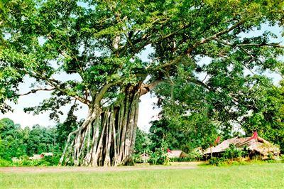 Khu di tích quốc gia đặc biệt Tân Trào-Tuyên Quang