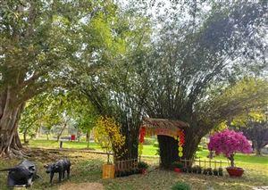 Khu Di tích Nguyễn Sinh Sắc mở cửa phục vụ dân nhân vui xuân Tân Sửu năm 2021