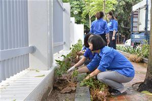 Bảo tàng Hồ Chí Minh đón nhận gần 1000 cây hoa Dâm bụt từ quê hương Chủ tịch Hồ Chí Minh