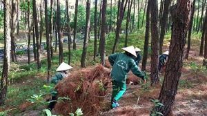 Dọn thảm thực bì phòng chống cháy rừng tại Khu mộ Bà Hoàng Thị Loan